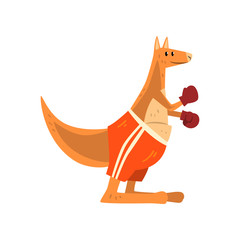 Kangaroo boxer with boxing gloves, funny sportive wild animal character doing sports vector Illustration on a white background