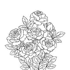 vector contour rose flowers bud leaf branch coloring book  pattern elements bouquet