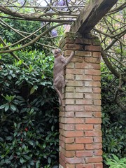 Adventures of a kitty in the garden: Lilac Oriental Shorthair cat