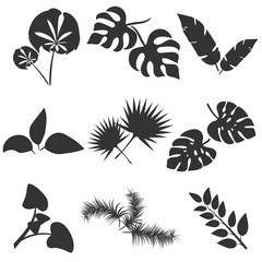 Tropical leaves silhouettes vector set isolated on white background. Different leaf collection. Jungle forest flora. Banana and exotic palm leaves in a flat cartoon style. Vector illustration.