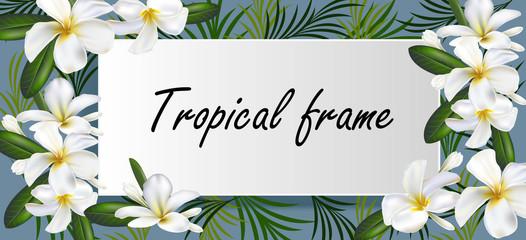 Plumeria flowers on tropical banner