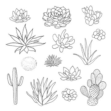 Succulent cactus collection. agava, pita, aloe, gastraea, haworthia, echeveria, Pachyphytum, prickly pear,