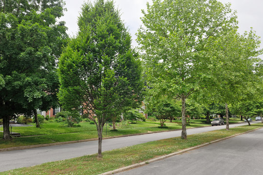 Urban neighborhood median strip with trees.