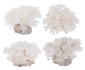 four light dense corals collection on white