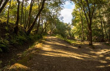 caminos entre el bosque