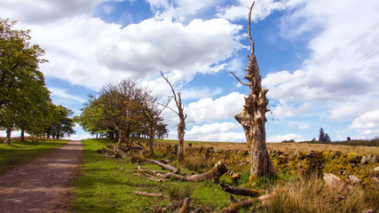 Picturesque scene of a row of dead trees beside a country path.