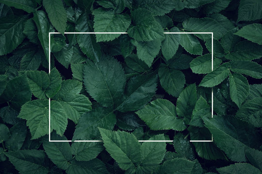 Nature background, abstract white frame in the leaves with copy space