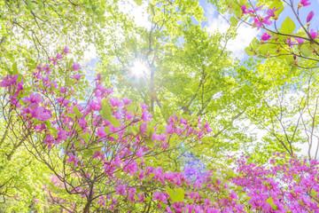 新緑の木と青空