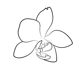 Vector illustration, isolated orchid flower in black and white colors, outline hand painted drawing