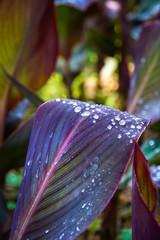 Drops of dew 1