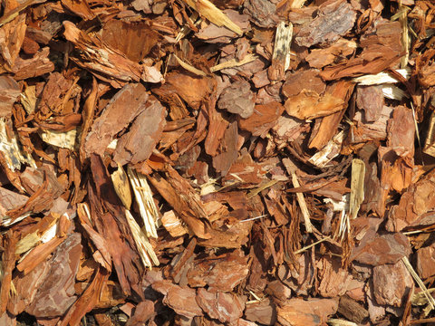 Decorative wood chips background. Brown pieces of tree bark, wooden splinters closeup. Top view, sunny day with shadows