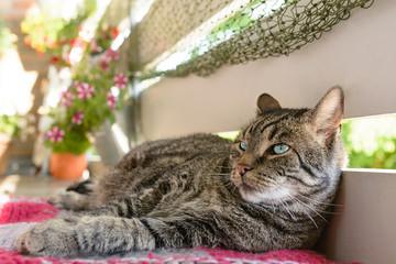 Eine grau getigerte Katze genießt die Sonne auf dem Balkon