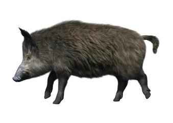 3D Rendering Wild Boar on White