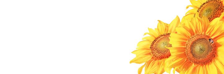 Fotobehang Zonnebloem Wunderschöne Sonnenblume mit einer Biene
