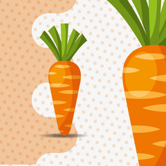 fresh vegetable carrots on dots background vector illustration
