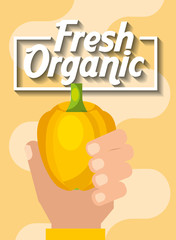 hand holding vegetable fresh organic yellow pepper vector illustration