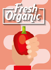 hand holding vegetable fresh organic pepper vector illustration