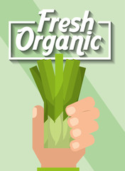 hand holding vegetable fresh organic chives vector illustration