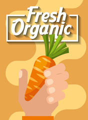 hand holding vegetable fresh organic carrot vector illustration