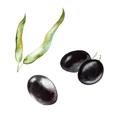 Black olives and leaves. Hand drawn watercolor illustration  isolated on a white background.