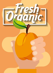 hand holding fresh organic fruit peach vector illustration