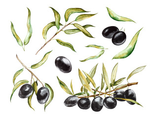 Black olives on branches with leaves. Hand drawn watercolor illustration  isolated on a white background.