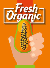 hand holding fresh organic fruit papaya vector illustration