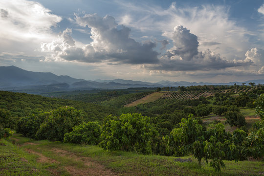 North Thailand landscape with path, mountain and longan fields with amazing cloudy sky and beautiful light