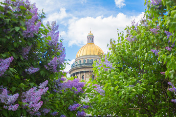 Saint Isaac's Cathedral (Isaakievskiy Sobor) in the flowers of lilac and Apple trees