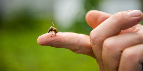In de dag Bee the bee stings the person in the finger