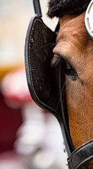 Close-up of eye of a horse