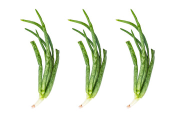 Branch of Aloe vera