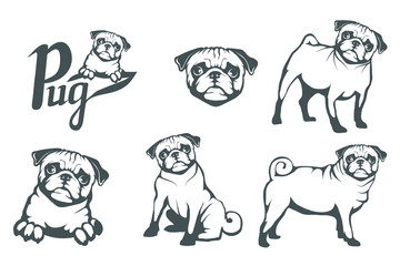Pug dog set. Head of an pug. Pets for design. Vector graphics to design.