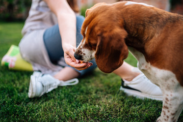 Close-up image of female person giving snack to a dog outdoors.