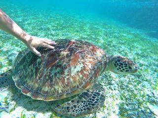 mergulhando com tartaruga  na indonésia
