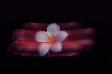 Plumeria frozen in motion