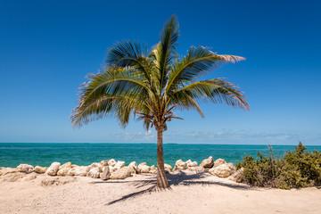 Lone Palm Tree in Key West