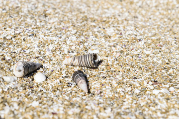 Close up angle view of three sea shells, horn, unicorn on the sand in the beach
