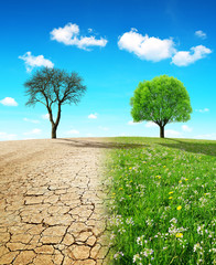 Dry country with cracked soil and meadow with growing tree. Concept of change climate or global warming.