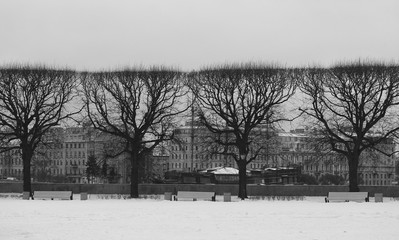 Photo beautiful black trees in winter in the city