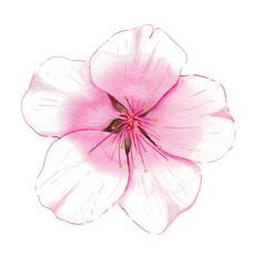 Watercolor Almond Blossom
