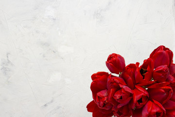 Red Tulips on a Light Stone Background. In the center of the image is a copy space. Flat lay, top view