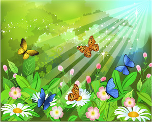 butterflies flying through the flowers in the spring season