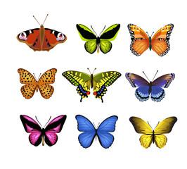 vector set of butterflies