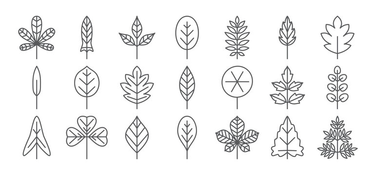 Leaf line icon. Foliage thin simple outline. Contour vector collection