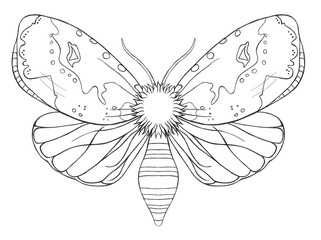 Watercolor decorative butterfly insect, drawn contour, print, black and white coloring, antistress on white background for decoration and design