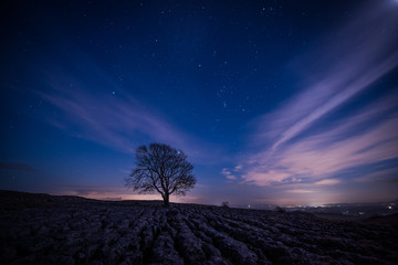 Malham Tree by night