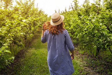 A gardener girl walks through a green apple orchard in a blue dress and hat