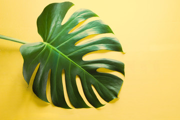 Single leaf of Monstera plant on yellow background. Close up, isolated with copy space.