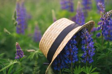 Straw hat with a black silk strip on a lupine field
